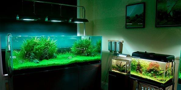 Bitkili akvaryum