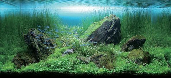Gerçek dünya Bitkili akvaryum
