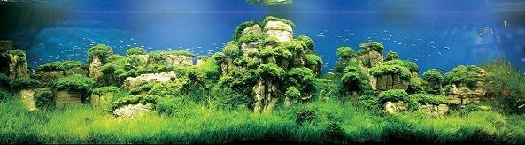 Bitkili akvaryum çimen taşlar