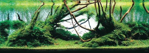 Bitkili akvaryum büyük ağaçlı