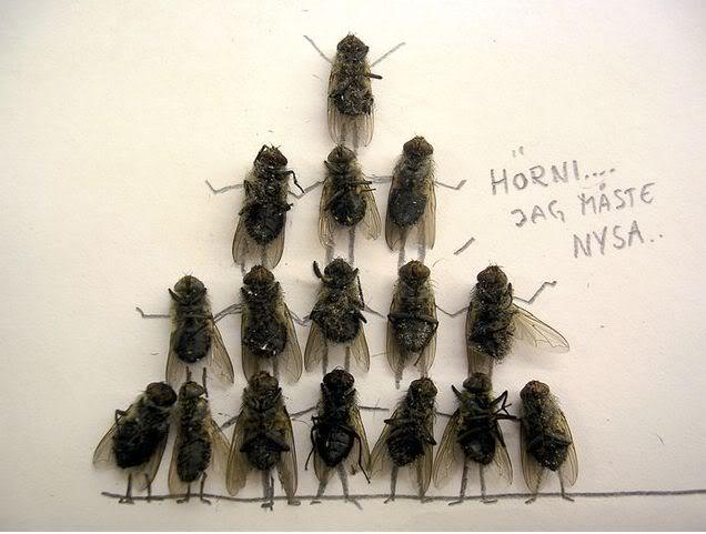 sinek komik Ölü sineklerin yaşamları