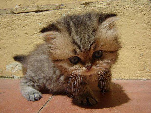 Yavru masum sevimli kedi tatli bakisli kedi
