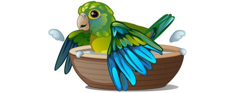 Papağan Bakımı Banyo Yaptırma Yıkama