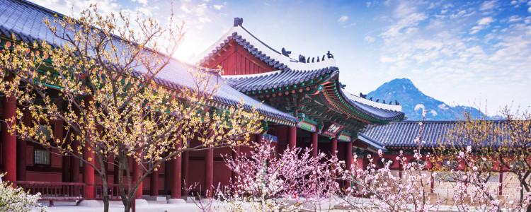 5 Maddede Koreliler - Kore Sevdası ve Kore Fanlara Dair